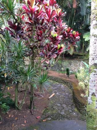 The Palms Cliff House Inn: Garden area