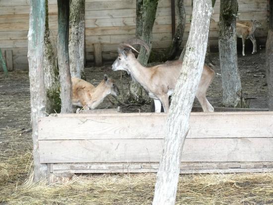 Ставропольский Зоопарк