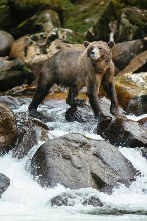 Nimmo Islet, Канада: Grizzly Bear Adventures