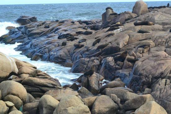 Leões marinhos e lontras em Cabo Polonio