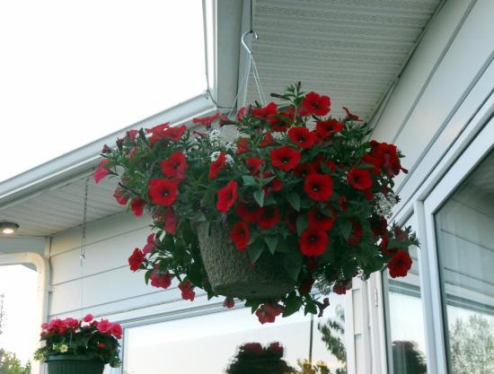 Auberge Gisele's Country Inn: Flowers around grounds