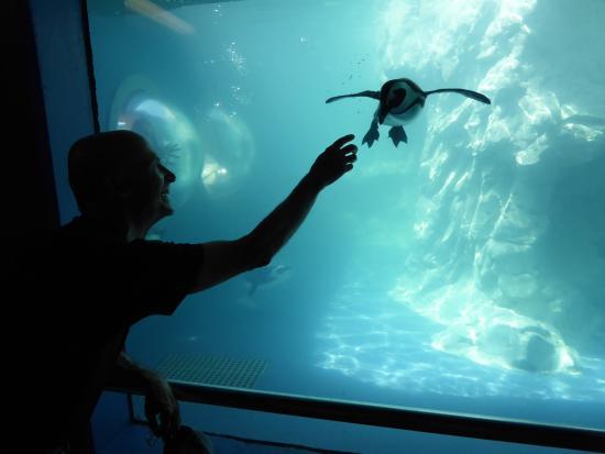 Penguin Picture Of Mystic Aquarium Mystic Tripadvisor
