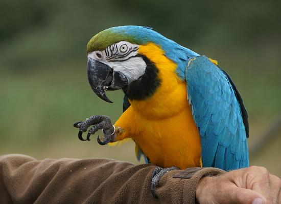 Nordsjaellands Fuglepark