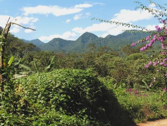 Hacienda San Vicente: Mindo general landscape