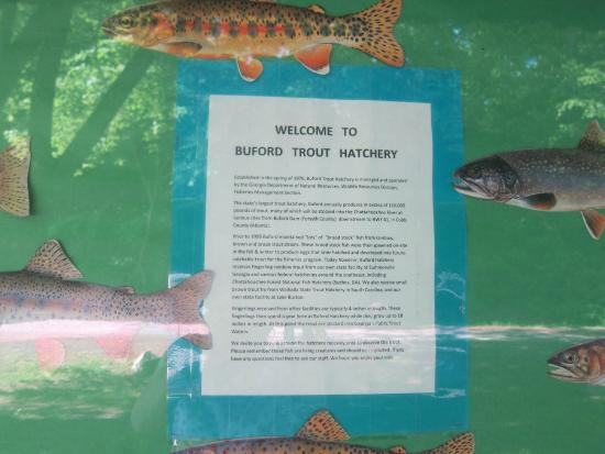 Info about the hatchery picture of buford trout hatchery for Georgia fish hatcheries