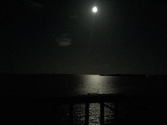Seahorse Landing: Moonlight