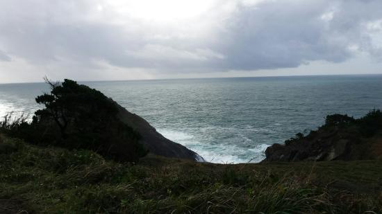 Port Orford Heads State Park: Beautiful day to hike on the heads!