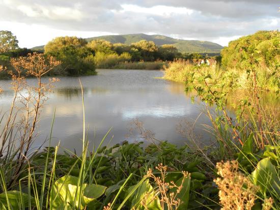 Indigena - Area Protegida de Flora y Fauna