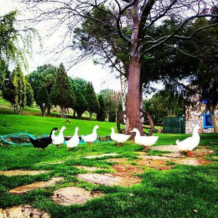 Ataol Tatil Ciftligi: bahçe