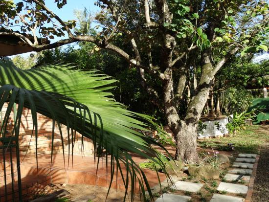 Igwalagwala Guest House: Garden view