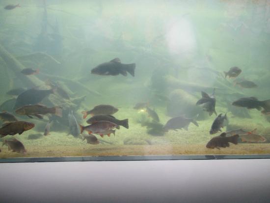 Mueritzeum Aquarium