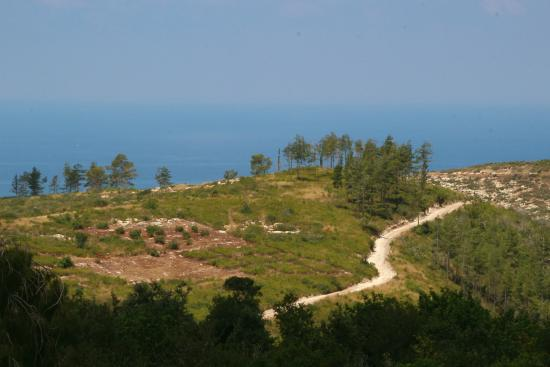 Carmel Forest Spa Resort by Isrotel Exclusive Collection: a room with a view and the Mediterranean sea ... (-;