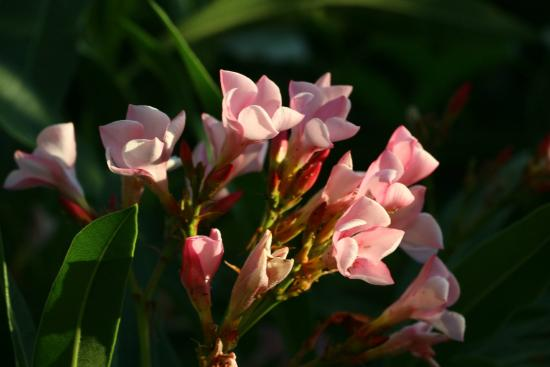 Carmel Forest Spa Resort by Isrotel Exclusive Collection: Flowers at sunset near our terrace