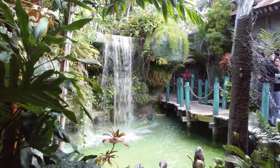 """Luau Polynesian Catering Service Miami Fort Lauderdale: A Picture Of """"The Garden """" Waterfall"""