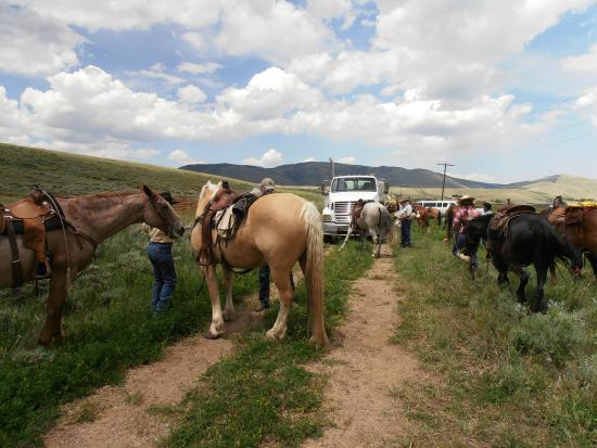 Vee Bar Guest Ranch: Great horses