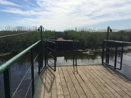 Województwo podlaskie, Polska: Footbridge over Narwia