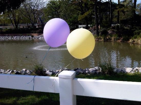Balloons At Hunt Club Farms
