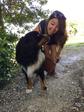 Podere Campriano: The family dog is a sweetie!