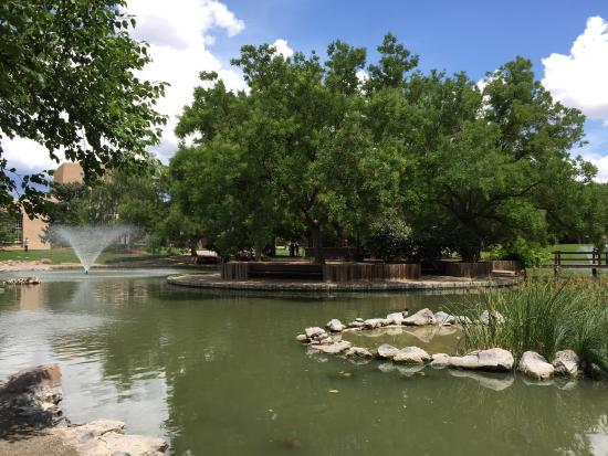 ‪Duck Pond at UNM‬