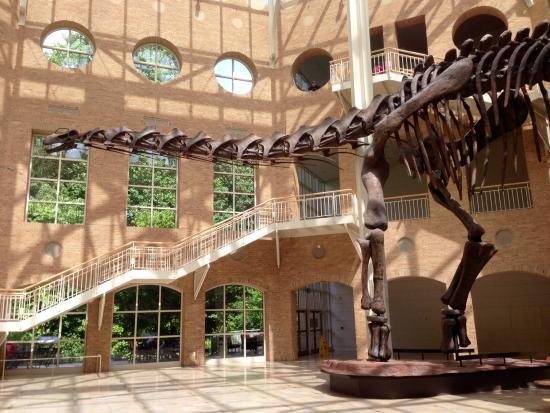 Natural Science Museum Georgia