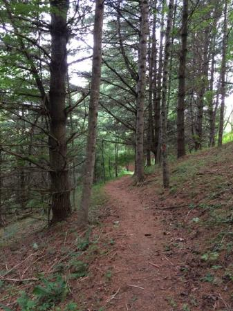 New River State Park: New River has great trails