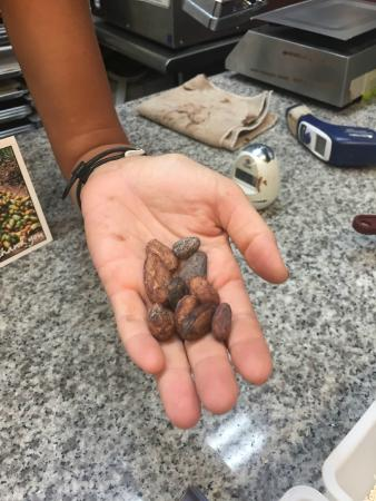 Madre Chocolate: Cacao beans