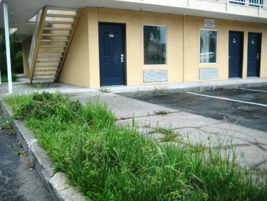 America's Best Inn, Jacksonville: Landscaping overgrown