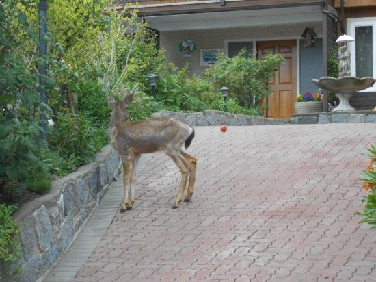 Mountain Bed & Breakfast: I saw a deer in the garden