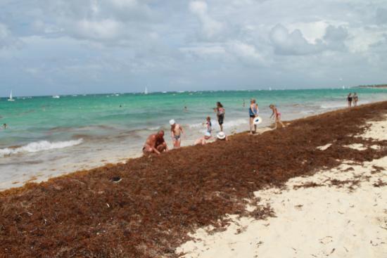 Grand Bahia Principe Turquesa: Beach after they clean it!