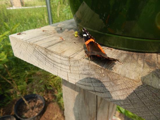 Butterfly Gardens of Wisconsin : Butterfly