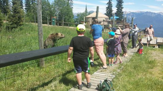 Golden, Kanada: Who's watching who, Boo the bear or you?