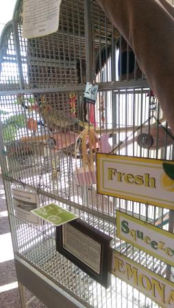 Lewis and Clark Motel: Foyer Bird