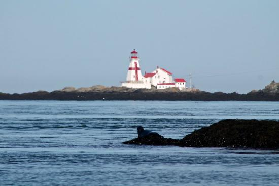 Downeast Charter Boat Tours: east quoddy head lighthouse with seal