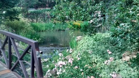 Flowers Plants Picture Of Red Butte Garden Salt Lake City Tripadvisor