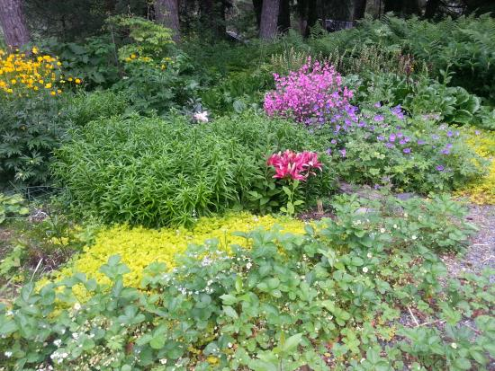 Girdwood Guest House: Judy's Beautiful Gardens