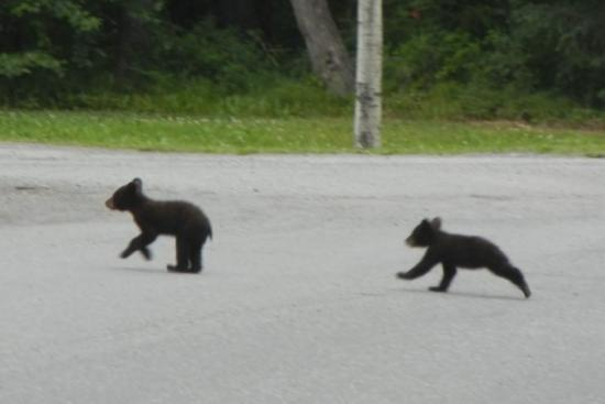 Girdwood Guest House: Twins run to Mama Black Bear