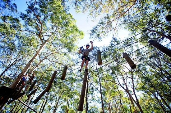 Thunderbird Park: TreeTop Challenge High Ropes Course