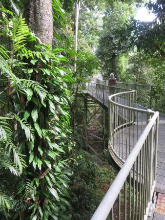 Mamu Tropical Skywalk Among the trees & Among the trees - Picture of Mamu Tropical Skywalk Innisfail ...
