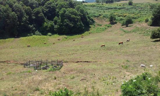 Agriturismo La Rocca dei Briganti: La Fattoria della Rocca Dei Briganti