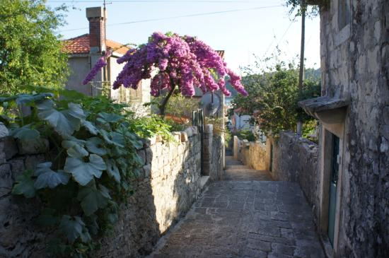 Cavtat Old Town : 旧市街の通り