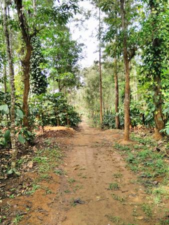 Ashiyana Estate Stay: Amazing scenery inside the coffee estate
