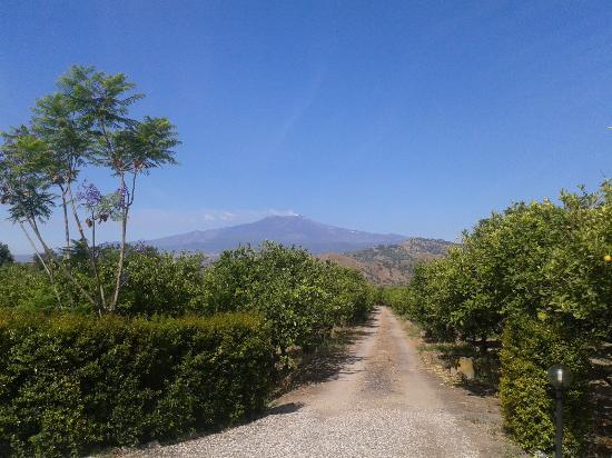 B&B Sole: Giardino di limoni con vista Etna