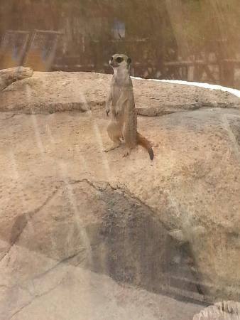 Prairie Dogs Up Close And Personal Picture Of El Paso