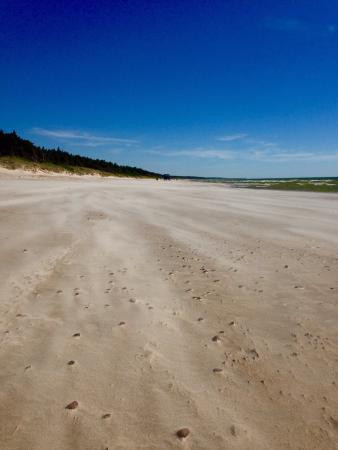 Palanga Beach  Sandy beach near Palanga  Nice. Sandy beach near Palanga  Nice    Picture of Palanga Beach