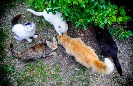 Agriturismo Ristorante Acquaviva: 5 von 7 (lieben) Hauskatzen