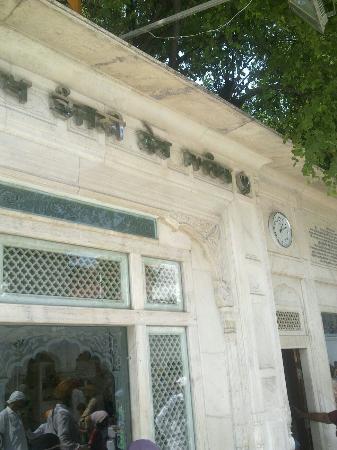 Dukh Bhanjani Ber Tree