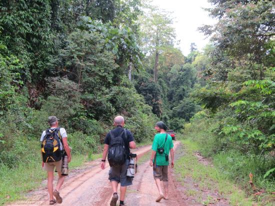 Borneo Pygmy Elephants - Picture of Deramakot Forest ...