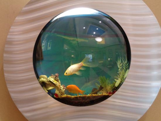 Holiday Inn Express Benton Harbor: Neat Fish Tanks in the Walls of the Lovvy