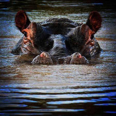 Gache Gache Lodge: Hip Hippo Hooray!