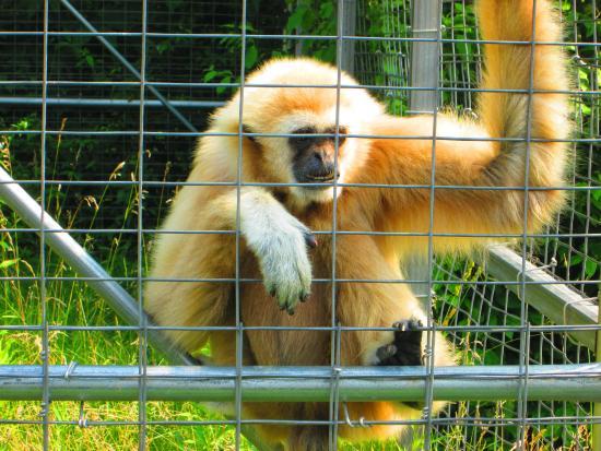 Safari Niagara: Monkeys